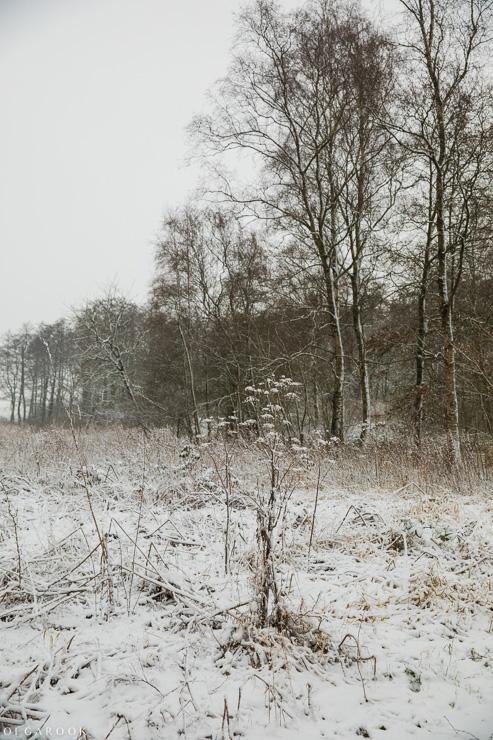Landschapfotografie_OlgaRook-5