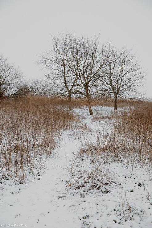 Landschapfotografie_OlgaRook-6