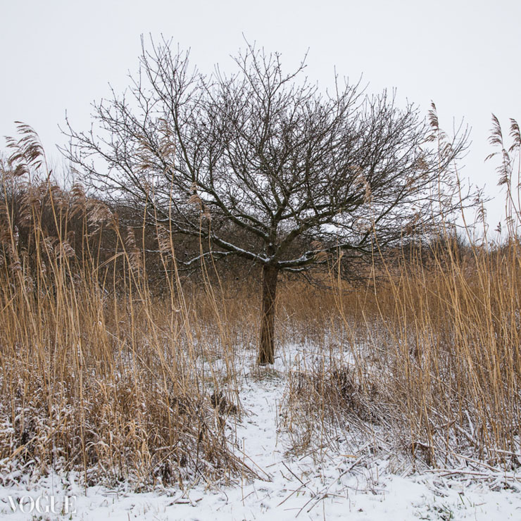 A lonely apple tree in the winter.