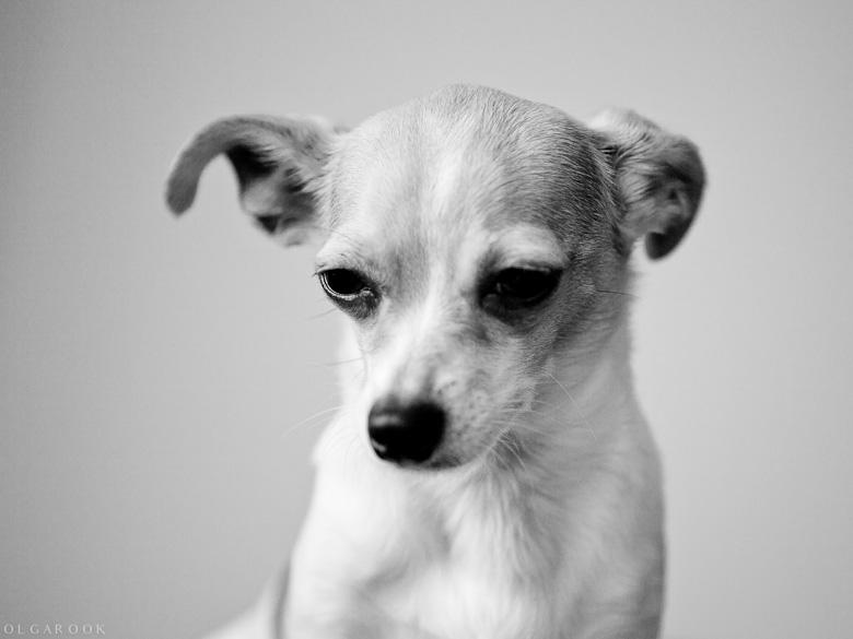 hondenportret_1