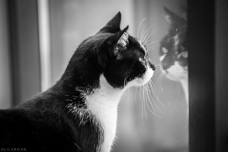 kattenportret