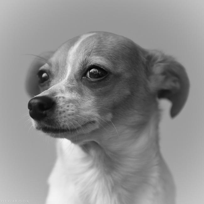 portret-hondje