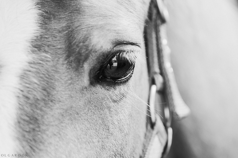 portret-paard