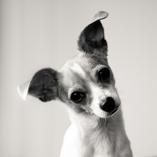 portret_hondje