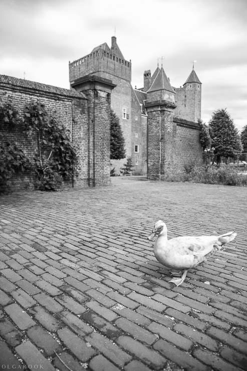 kasteeltuin-Assumburg-expo-13