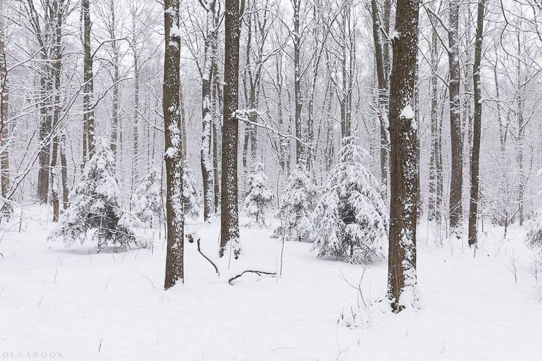 Witte winter in een bos in de buurt van Moskou